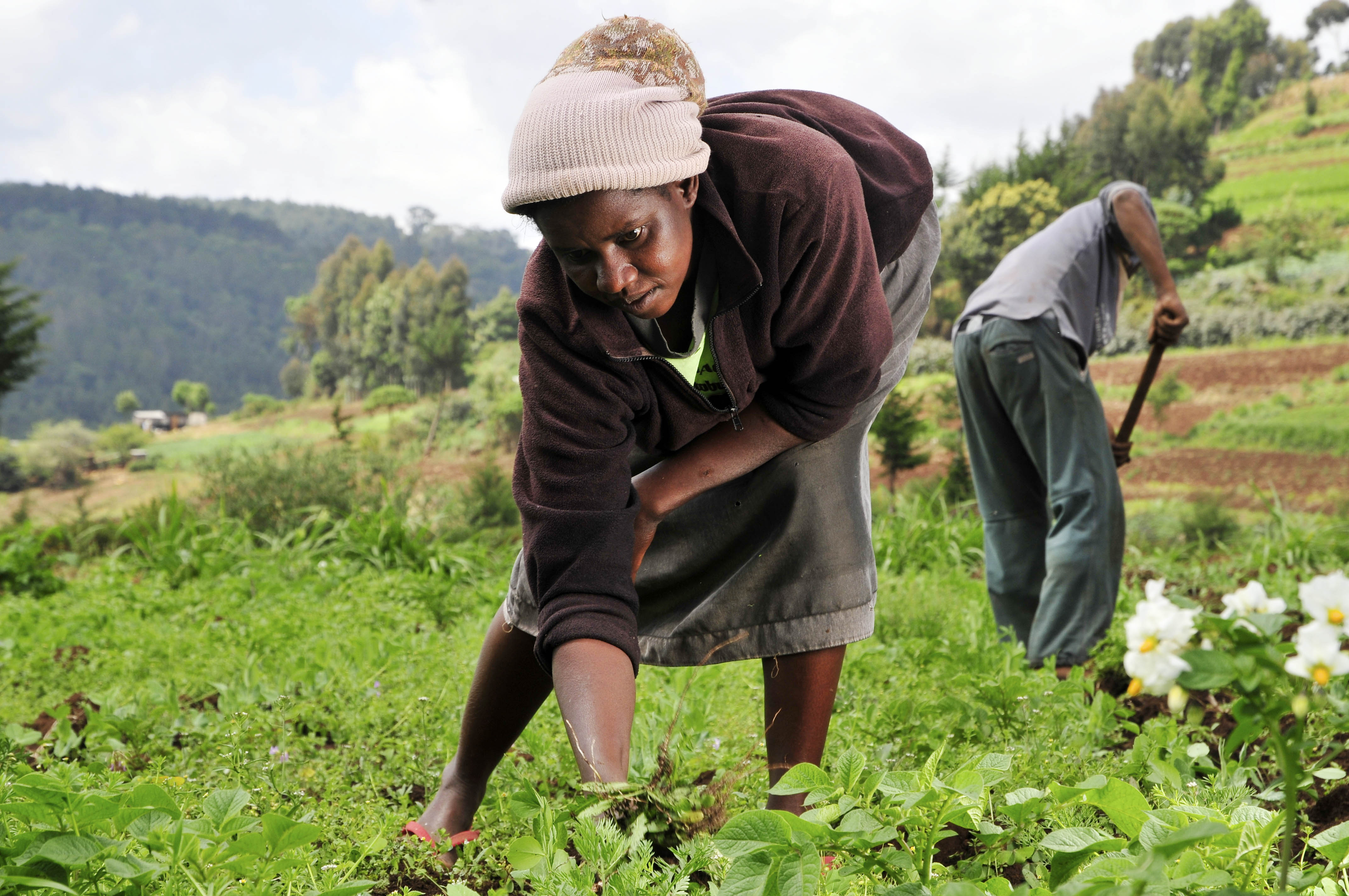 Woman_farmer_in_Kenya